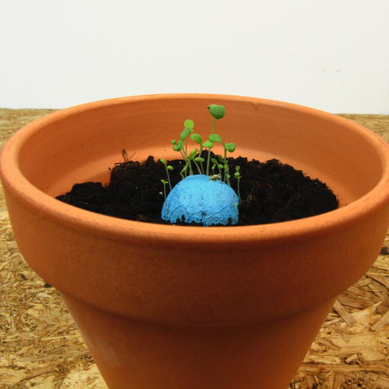 Pack 2 bombas de semilla biodiversidad. Personalizadas. Varios colores. packs bombas biodiversidad germinacion